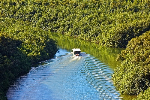 a river boat cruising through the wailua river during a hawaiian cruise ship tour