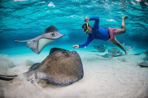 man snorkeling with stingrays in antigua