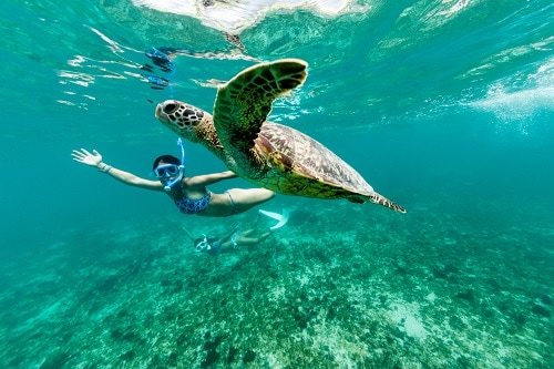 woman snorkeling with sea turtle in princess cays in the eastern caribbean