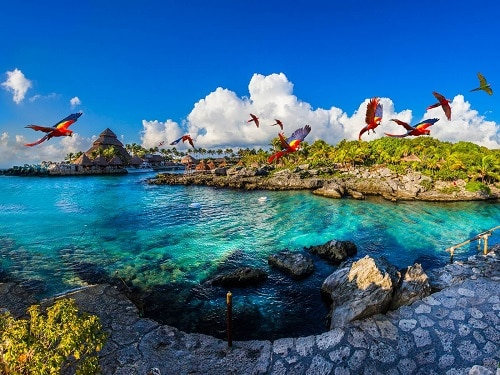 parrots flying across a beautiful beach in cozumel