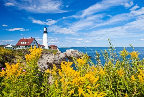 yellow flowers surrounding the view of a light house in portland