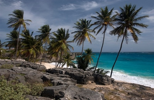 a view of a beach with palm trees and rocks in barbados
