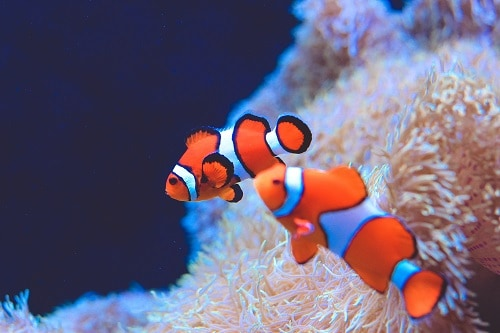 clowfish from an aquarium exhibit