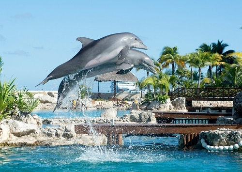 dolphins jumping into the water as part of an aquatic show at an aquarium