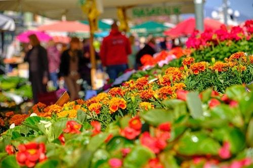 flowers on display at rijeka's city market