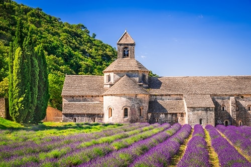 a lavender farm in france