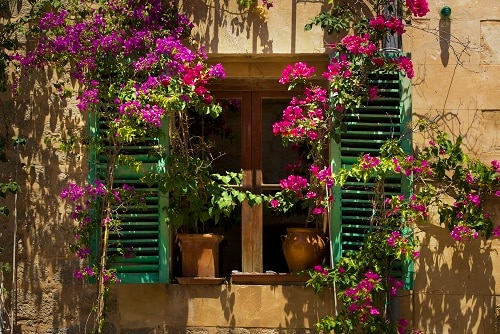 flowers adorning a windowsill on the streets of palma de mallorca