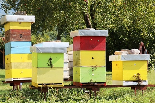 wooden bee colonies in Montenegro