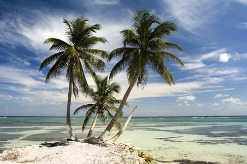 palm trees on the beach of costa maya