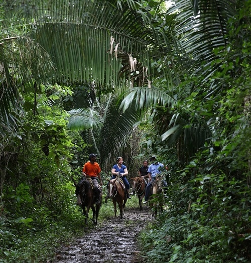 group of people horseback riding along the jungle in belize