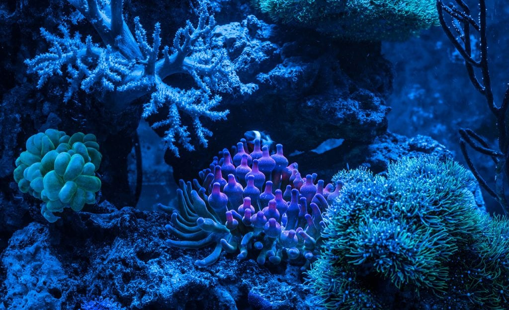 Coral reefs come alive at night.