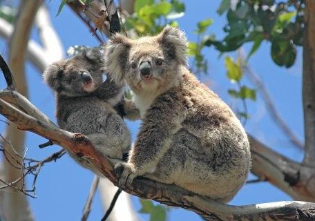 The 6 wildest animals you need to see when you visit Australia