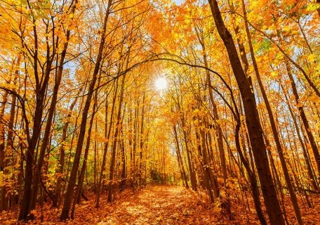 Your Guide to Seeing Fall Foliage