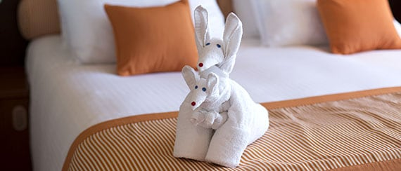 Staterooms - towel animal on the bed in a stateroom