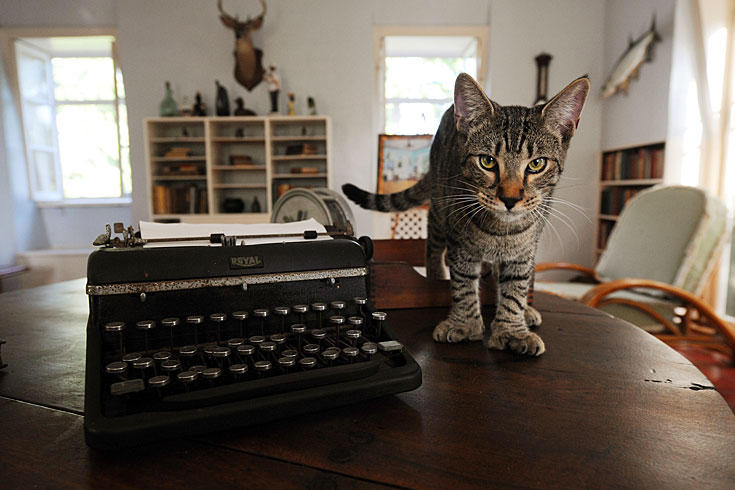 The six-toed Hemingway House cats
