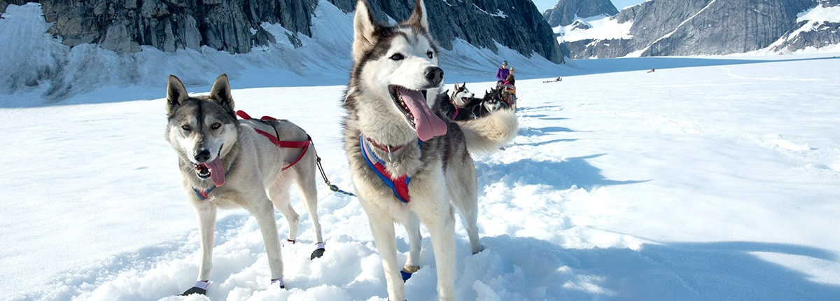 dog sledding adventure on mendenhall glacier
