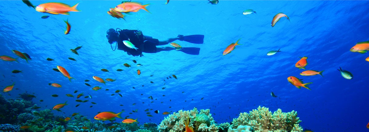 man scuba diving with fish in beautiful blue waters