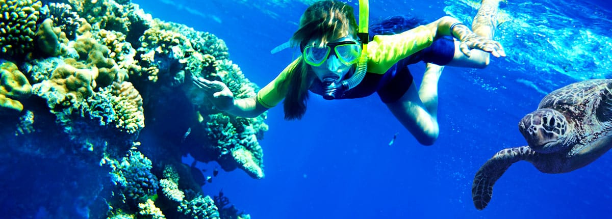 scuba dive with turtles in maui