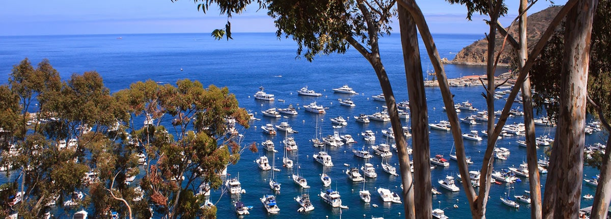 boats anchored in the bay of catalina island
