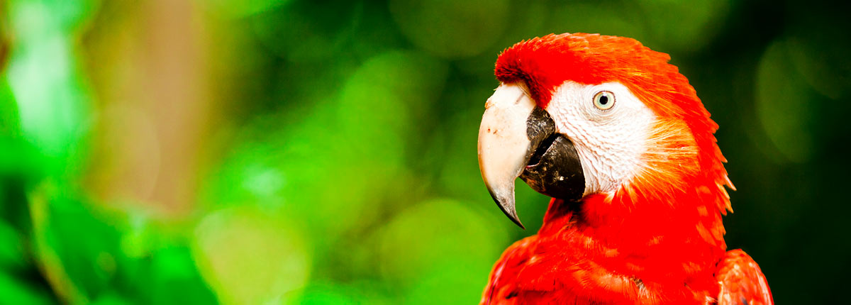 look at red macaws in the jungle