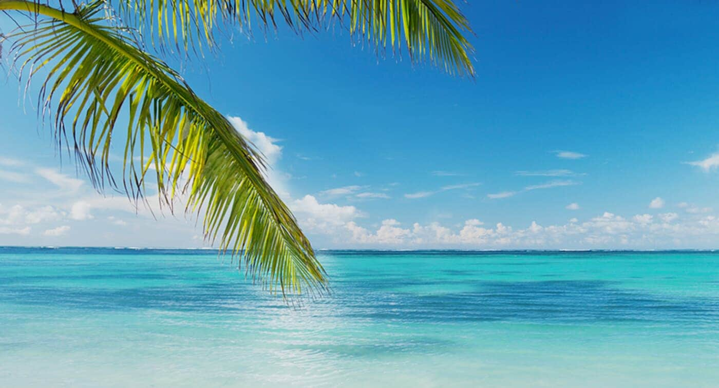 CALM BLUE BEACH AND PALM TREE BRANCHES